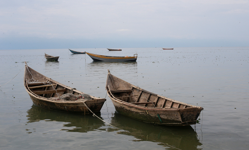 Fishing boats used by Congolese people fleeing ethnic fighting in the Democratic Republic of Congo float on the shore of Lake Albert, Uganda REUTERS/James Akena